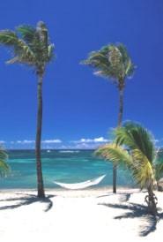Nevis palm tree beach