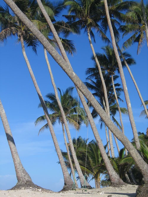 Samoan Palms